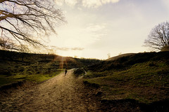 Running horse @ sundown (RigieNL) Tags: posbank netherlands sony sonya6000 sundown sunset sun holland veluwe nature landscape horse wildhorse