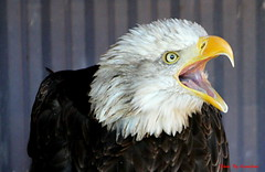 (70) Liberty's Owl Raptor & Reptile Centre