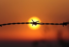 Suffering... (modestino68) Tags: tramonto sunset sole sun fence fili wire luci lights ombre shadows larsdanielsson
