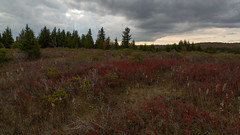 Dolly Sods in the Late Afternoon (Ken Krach Photography) Tags: westvirginia
