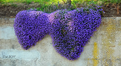 Due cuori (♥danars♥) Tags: cuori cuscini feltre fiori primavera blu aubrezia