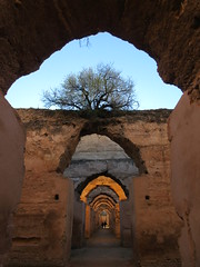 Tree among ruined arches of royal stables, Heri es-Souani, Meknes, Morocco (Paul McClure DC) Tags: meknes morocco almaghrib jan2017 meknès historic architecture