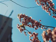 梅の木 • Plum Tree (Jon-Fū, the写真machine) Tags: jonfu 2017 olympus omd em5markii em5ii em5mkii em5mk2 em5mark2 オリンパス mirrorless mirrorlesscamera microfourthirds micro43 m43 mft μft マイクロフォーサーズ ミラーレスカメラ ミラーレス一眼カメラ ミラーレス機 ミラーレス一眼 snapseed japan 日本 nihon nippon ジャパン ジパング japón जापान japão xapón asia アジア asian orient oriental aichi 愛知 愛知県 chubu chuubu 中部 中部地方 nagoya 名古屋 ume plumtree plumtrees 梅の木 梅 tree trees 木 木々