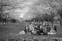 Spring Picnic (t conway) Tags: