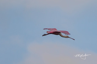Rosy flyby