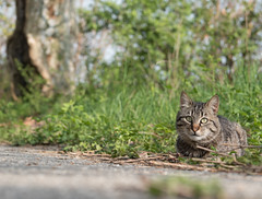 (shady farag) Tags: cat animal cats pets love nature gatti mici italy photography photos focus animale gattino gattini gatto ritratto portrait composition catsofflickr