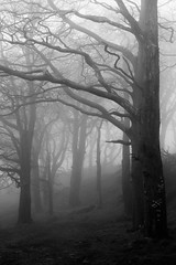 Trees in Fog, Skipton (jayvalentinephotography) Tags: blackandwhite branch branches fog forest mist nature tree trees winter wood woods