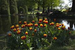 _DSC0838 (Riccardo Q.) Tags: parcosegurtàtulipani places parco altreparolechiave fiori tulipani segurtà