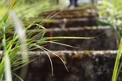 La montée des marches (camilleromane1) Tags: marches escaliers gravir monter sonyalpha68 sony