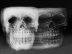 Dein zweites Gesicht / Your second face (ingrid eulenfan) Tags: macromondays makroobjektiv macro makro schädel skull unscharf intentionalblur camerablur verwischt motionblur