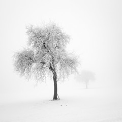 frozen (ArztG.|Photo) Tags: frozen tree white silence light fog love mood yup cheers 500x500 myfavs