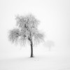 frozen (ArztG. Photo) Tags: frozen tree white silence light fog love mood yup cheers 500x500 myfavs