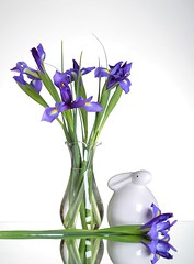 Irises (Karen_Chappell) Tags: iris purple green white bunny rabbit easter holiday stilllife flowers floral vase decor decoration spring