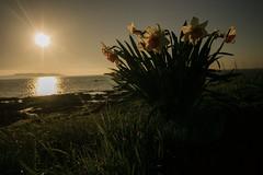 Greeting the new day (A Costigan) Tags: lambayisland dublin ireland irish irishsea