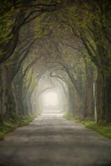 green again (Fotos aus OWL) Tags: allee strase bäume frühling senne laub grün frisch nebel
