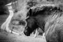Valle de Oma 1 (P. Mendizabal) Tags: d750 500mm 14 14d naturalez nature horse caballo camino path blancoynegro bw monocromo monochrome