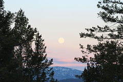 IMG_0865 (brittenywood) Tags: moutains moon clearskies trees nature morningmoon montana
