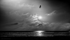 Joan's Angel (JDS Fine Art Photography) Tags: bird bw clouds inspirational spirituak dramatic dramaticsky light illumination beauty naturesbeauty ocean water landscape oceanscape skyscape