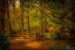Through the gate (Bren Ryan (RyanPhotography)) Tags: kent landscape woodland ashenbankwoods woodlandwalks cobham