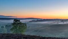 Gentle Mist (nicklucas2) Tags: newforest mist dawn heath heather tree landscape cloudsstormssunsetssunrises