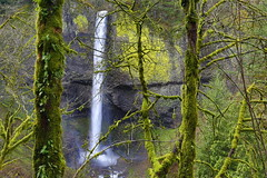 Peeking Through (Golden Ginkgo) Tags: waterfall lichen oregon hdr landscape nature green latourell usa park spring vegetation forest colors