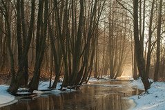 Follow The River (Łukasz Babula) Tags: poland winter river water tree trees snow snowy frost frosty white brown yellow red orange gold golden frozen sun sunny sunrise sunbeam sunshine sunlight ray rays nature natural morning peaceful serene silence landscape countryside colours colors cold wild wildlife nikon d300 nikkor 1855 january wood woods