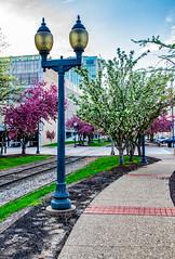 109:365 - April Showers (LostOne1000) Tags: spring cy365 flowers 19apr17 traintracks 365the2017edition iowa light trees lightpost 109365 3652017 norain unitedstates cedarrapids day109365 downtown us