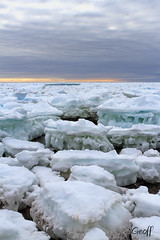 Pack Ice (gwhiteway) Tags: ice pack nature newfoundlandandlabrador canada climate change power frozen pressure damage color rocks small cove bay movement snow frost atlantic ocean sea spring risk danger global warming arctic shore shoreline coastline nordic northamerica travel tourism
