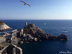 Porto Venere (federicobrina) Tags: blue sea bird wonderful bestplaces nature iphone iphone6 shot landscape view sun sky beauty europe panorama travel cinqueterre 5terre portovenere italia italy