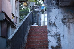 (camilakater) Tags: cat stair brazil