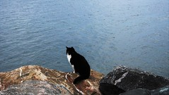 I wonder what's in her mind.I hope she doesn't jump ... (C.DeR) Tags: cat animals feline sea seascape rock catlover