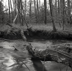 steady flow (rophibri) Tags: river flow tree ilford kiev delta stream water grass