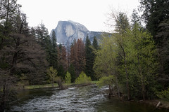 Half Dome and the Merced River, inside Yosemite National Park. (apardavila) Tags: california halfdome mercedriver yosemite yosemitenationalpark yosemitevalley nationalpark trees