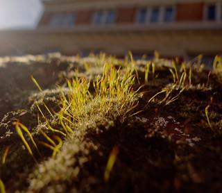La mousse - The moss