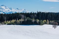 Säntis (SWISS EAST PICS) Tags: säntis snowinspring tree wood panorama swiss swisslove alpstein swissmountains sunnyday sunny ostschweiz