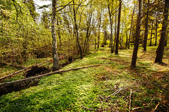 The Local Jogging Trail (Splattel) Tags: trees summer nature beautiful forest landscape nikon sweden sunny tokina fantasy gotland visby p18 1116mm d300s