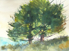 IMG_3397_cropped_trees2-288