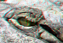 Crocodile eye 3D (wim hoppenbrouwers) Tags: eye 3d crocodile