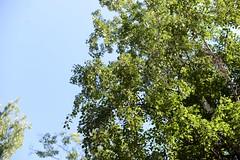 WeekEnd Pictures (BlackberryLight) Tags: summer green nature june 50mm dof bokeh weekend d600 inthecountry nikond600