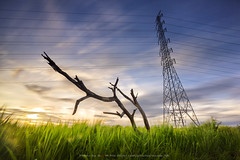 Its may humans can destroy the nature but can't above it ,ever destroyed (Noom HH) Tags: sunset sky nature grass landscape thailand meadow bluesky environment huahin globalwarming deadtrees electricitypost highvoltagepole