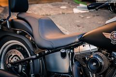 IMG_2234 (Shandiz S.) Tags: boy fat lo harley motorcycle davidson fatboy