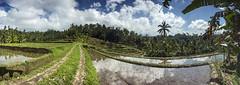 Impok_D130810T020239_ICT03207-03213 (Impok) Tags: indonesia penebeltabananbali