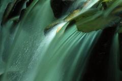 IMG_9261 (Martine.liu) Tags: blinkagain greenbeautyforlife