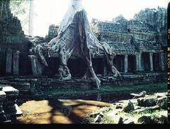 (Sbastien Pineau) Tags: film analog temple ruins cambodge cambodia roots slide scan ruine scanned analogue siemreap angkor templo pineau ruines racines analogic races kampuchea   sbastienpineau