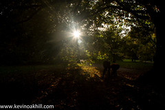Collecting conkers in the autumn leaves (www.kevinoakhill.com) Tags: pictures wood autumn trees ladies light sunset horse sun sunlight kewgardens london beautiful leaves kew gardens thames canon photography eos photo woods october kevin day colours photos oakhill chest watch nuts picture sunny ground richmond beam chestnuts 25 7d borough through 25th conkers twenty collecting upon fifth 2013 autumnwatch