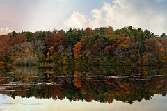 Reflected Grace (Read2me) Tags: pond lake water reflection autumn trees she cye thechallengefactory pregamechallengewinner gamewinner challengeclubwinner friendlychallengeswinner