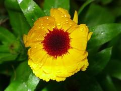flowers (RaymondUK) Tags: lx5