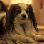 1311_PET-DOG-76 thumbnail