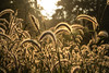 Udaya kAladoLu (Madhura Bindu) Tags: sunset waynad vythri