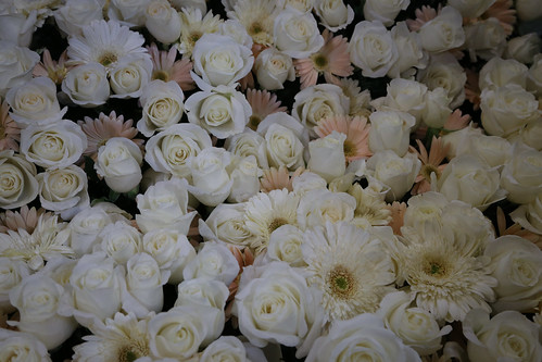 Rose Parade 2014: